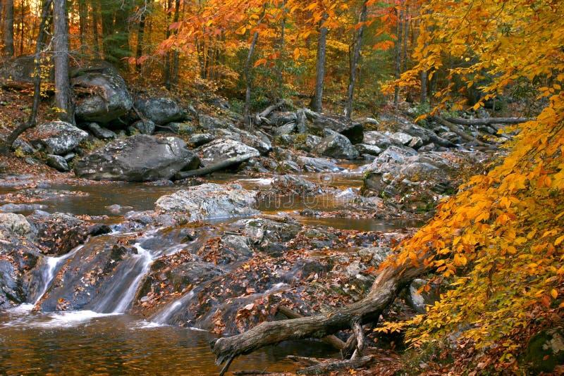 Felsiger Nebenflussherbstwald stockbild