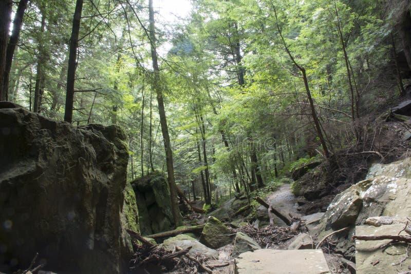 Felsiger Waldboden lizenzfreie stockbilder