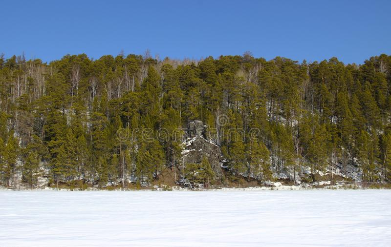 Felsiges Ufer des gefrorenen Flusses mit hohen Kiefern lizenzfreie stockbilder
