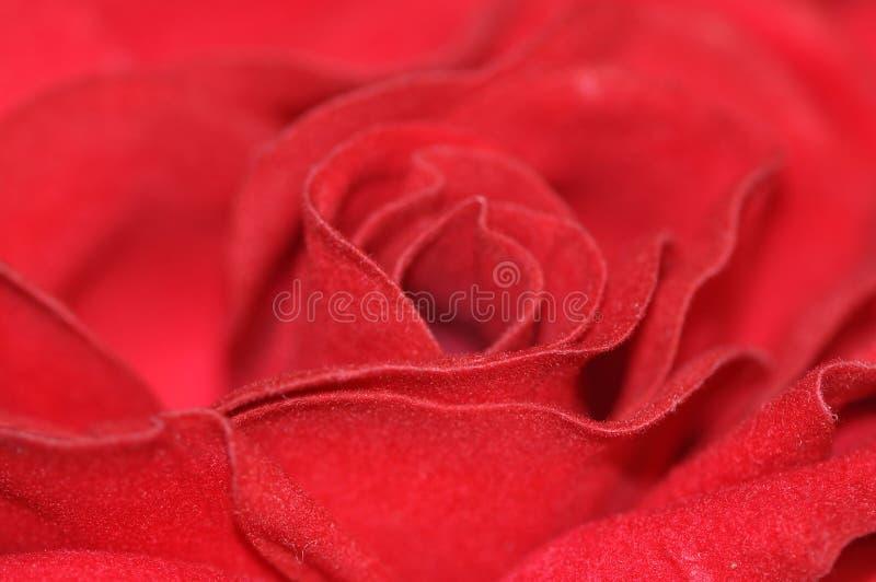 Download Felt Rose Stock Images - Image: 11163644