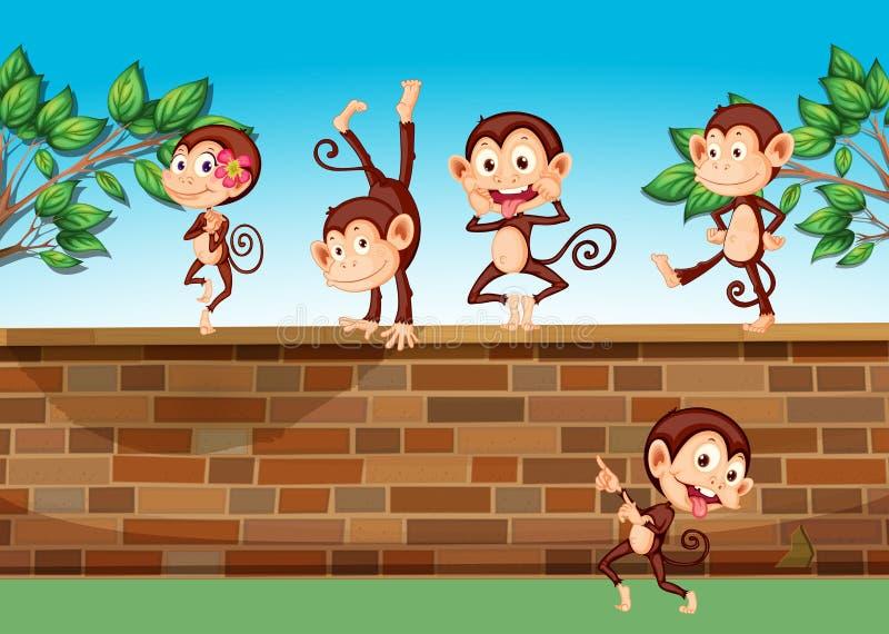 Fem apor som spelar på staketet royaltyfri illustrationer