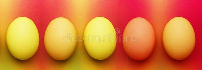 Fem biologiska organiska röda orange gula easter ägg på en regnbågebakgrund royaltyfri foto