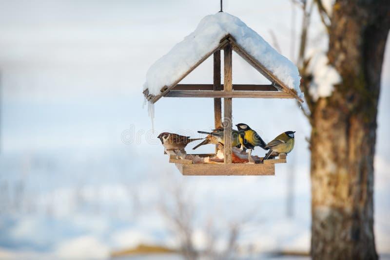 Fem fåglar i förlagemataren arkivfoton