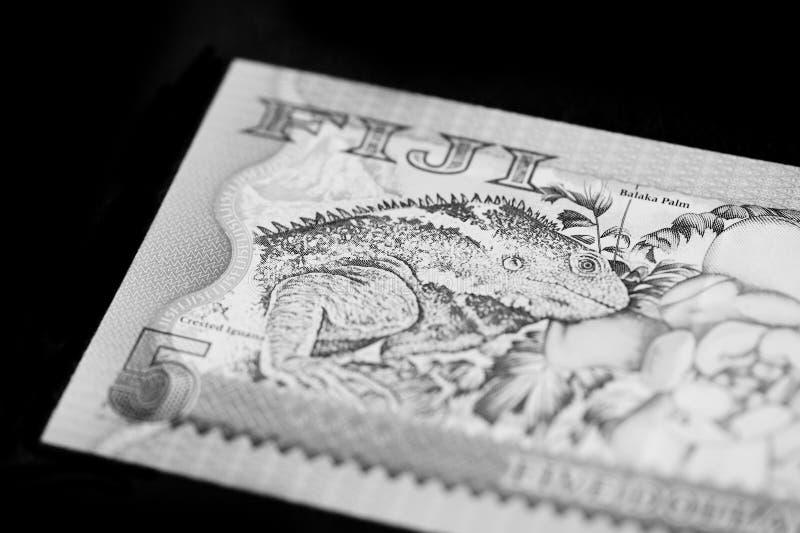 Fem Fijian dollar sedel på en svart bakgrund svart white royaltyfri bild