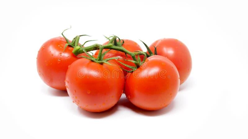 Fem fulla röda tomater på en vit bakgrund royaltyfri bild