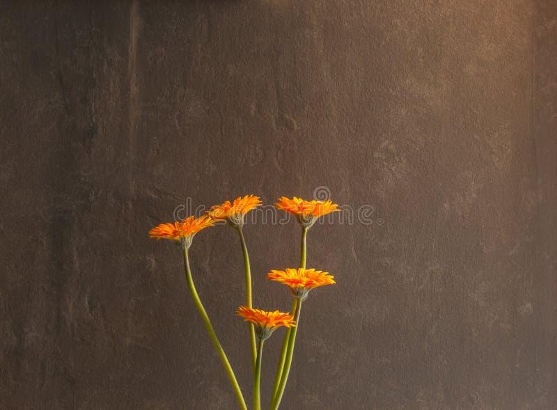Fem Gerberablommor mot en texturerad grå vägg fotografering för bildbyråer
