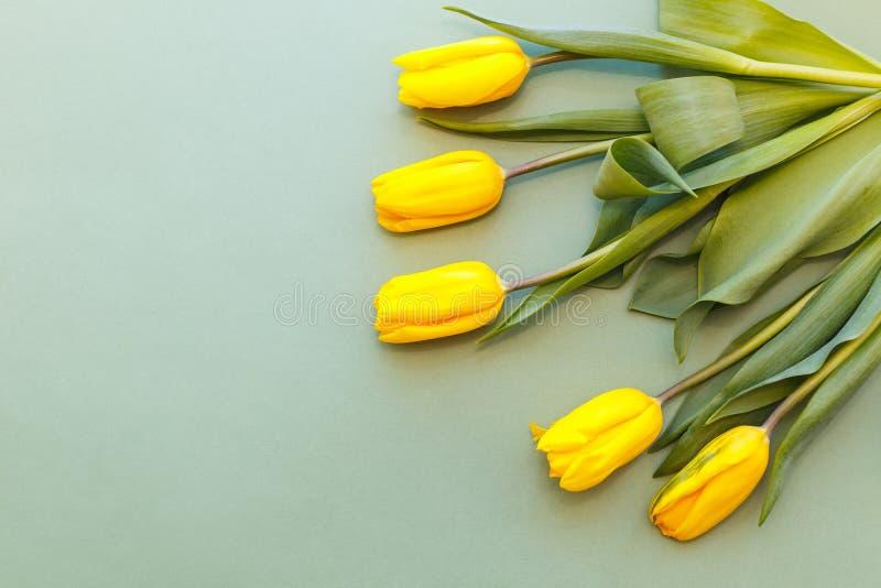 Fem gula tulpan är i det övre högra hörnet av fotoet på en pastellfärgad grön bakgrund fotografering för bildbyråer