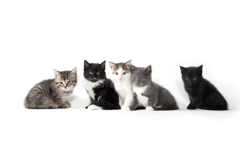 Fem gulliga kattungar på vit bakgrund arkivbilder