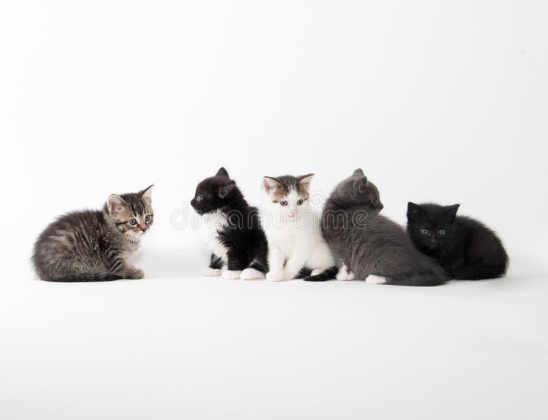 Fem gulliga kattungar på vit bakgrund royaltyfria bilder