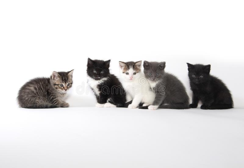 Fem gulliga kattungar på vit bakgrund royaltyfria foton