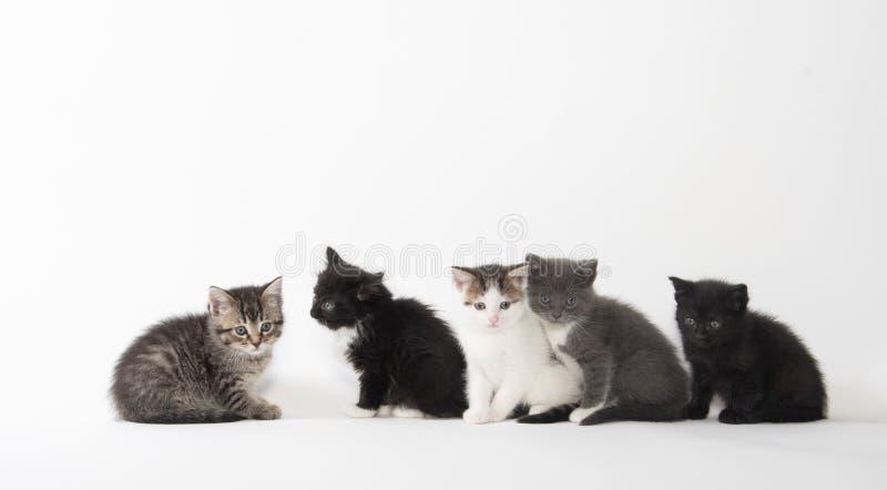 Fem gulliga kattungar på vit bakgrund arkivfoto