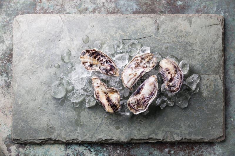 Fem nya rå ostron med is royaltyfri bild