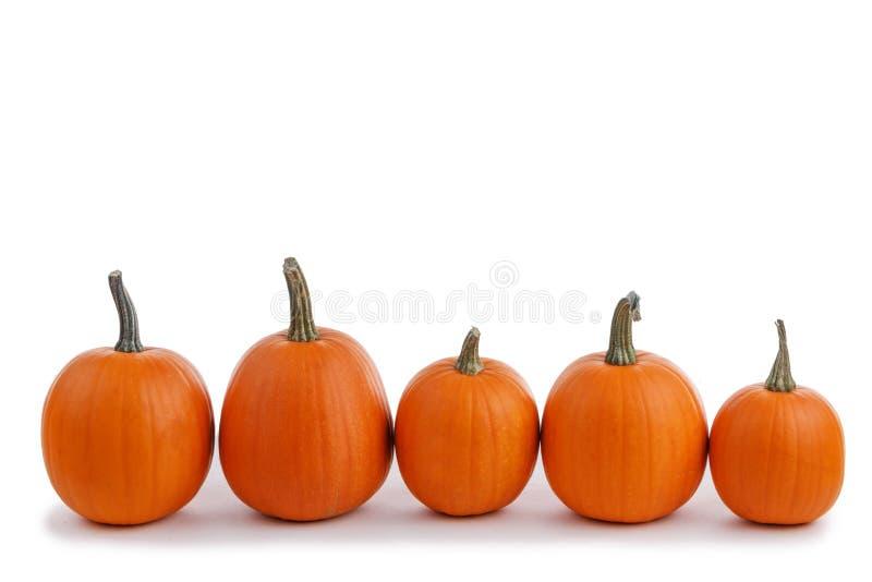 Fem orange pumpor arkivfoto