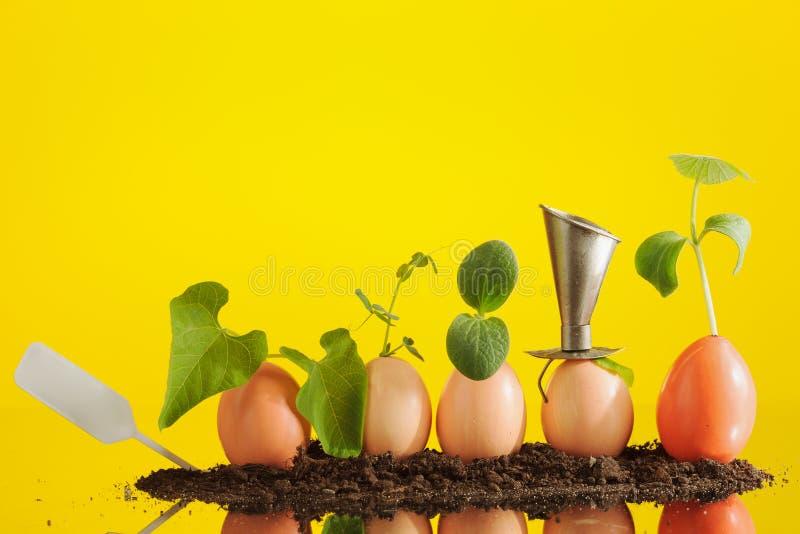 Fem organiska plantaväxter i äggskal, arbeta i trädgården för eco horisontal arkivbild