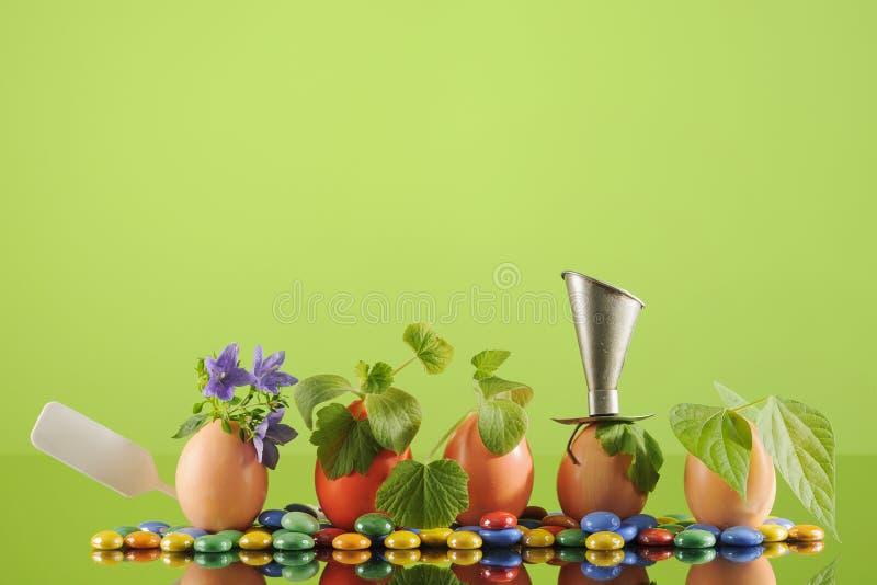 Fem organiska plantaväxter i äggskal, arbeta i trädgården för eco horisontal royaltyfria bilder