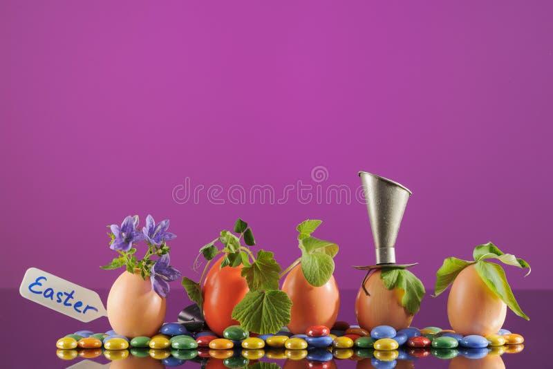 Fem organiska plantaväxter i äggskal, arbeta i trädgården för eco horisontal arkivfoton