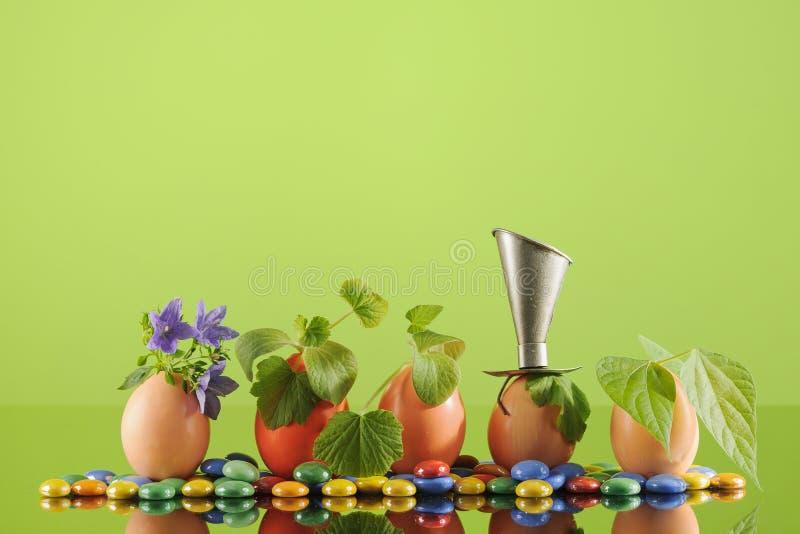 Fem organiska plantaväxter i påskägg på grön bakgrund för limefrukt Eco arbeta i trädgården royaltyfri bild