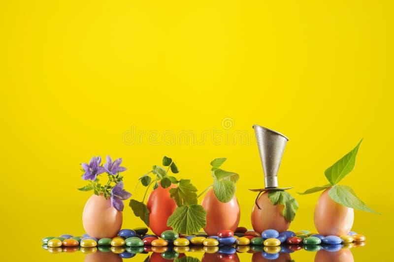 Fem organiska plantaväxter i påskägg på gul bakgrund, arbeta i trädgården för eco arkivbilder