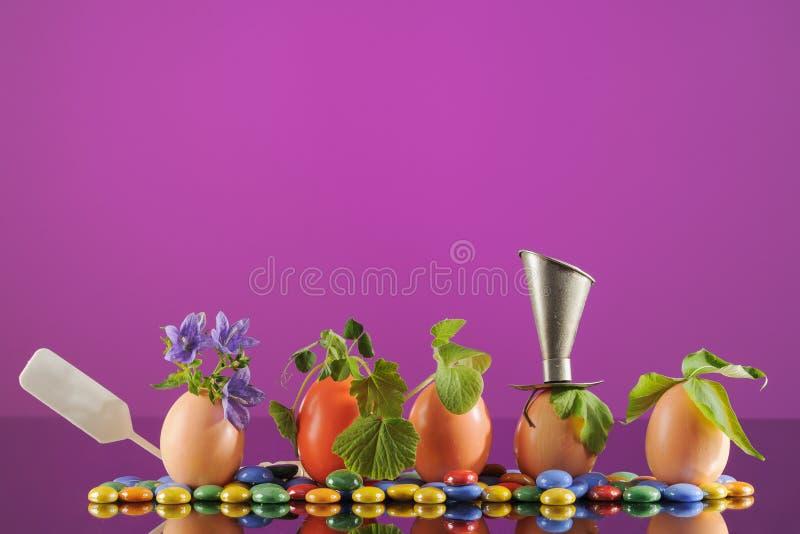 Fem organiska plantaväxter i påskägg på violett bakgrund Eco arbeta i trädgården royaltyfri fotografi