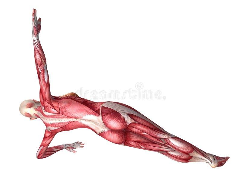 Atemberaubend Medial Verzweigungsblock Anatomie Bilder - Anatomie ...