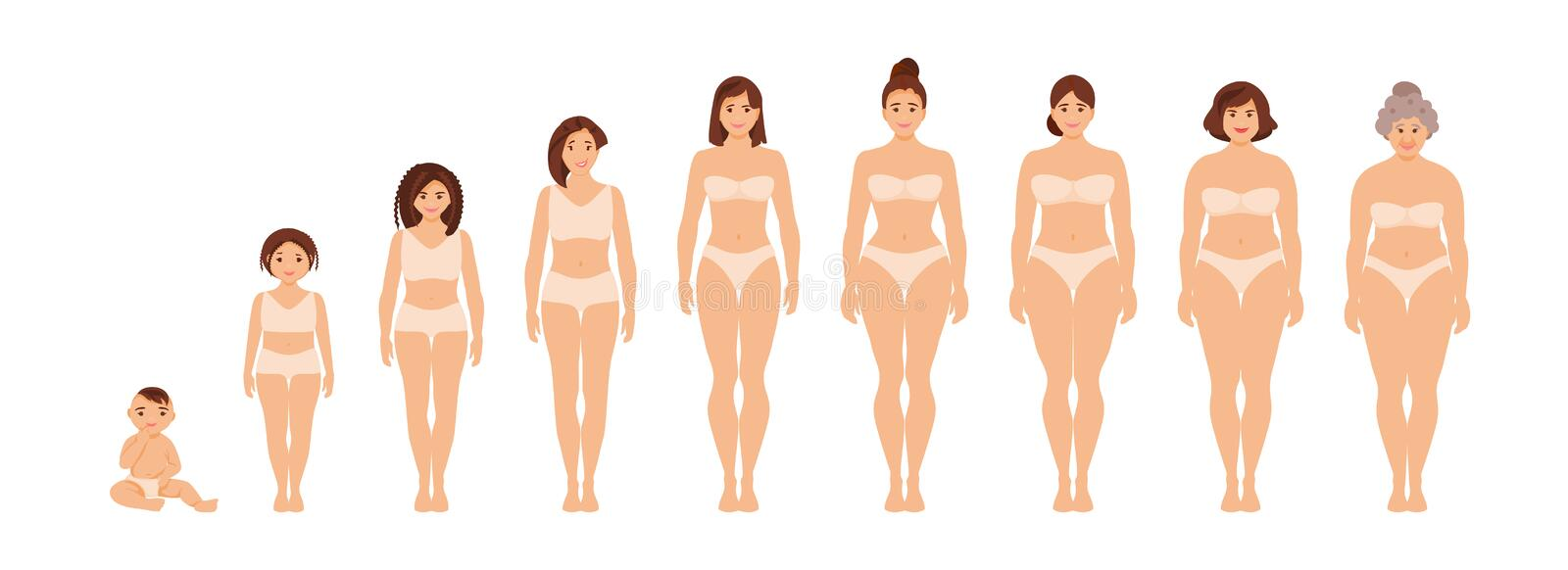 Female anatomy of different ages vector stock illustration