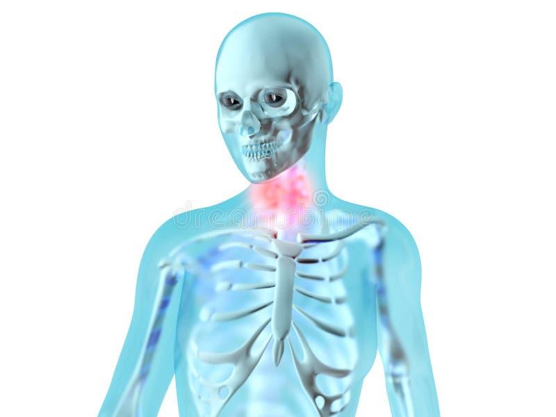 Female Anatomy - Throat ache. Female anatomy. Throat ache. 3D illustration vector illustration