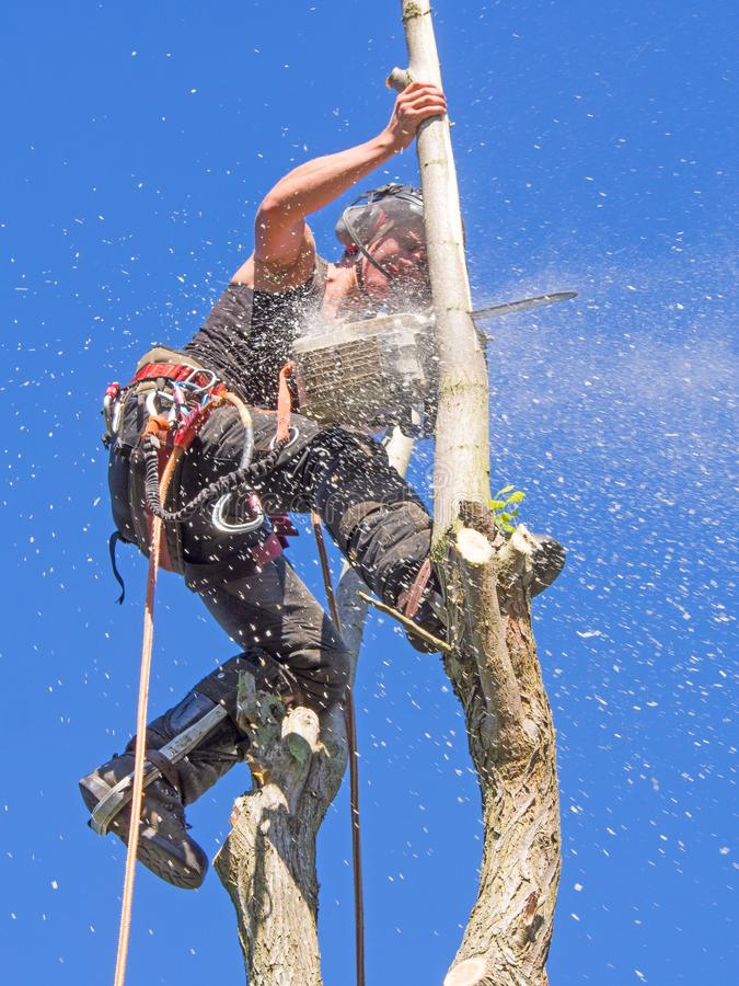 Female Arborist using a chainsaw. stock image