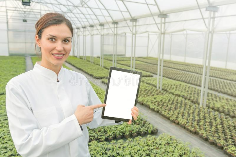 Female Biotechnology engineer tablet greenhouse. Plant seedlings stock images
