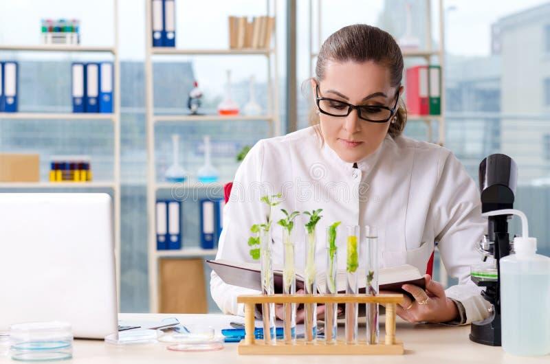 The female biotechnology scientist chemist working in the lab. Female biotechnology scientist chemist working in the lab stock photography
