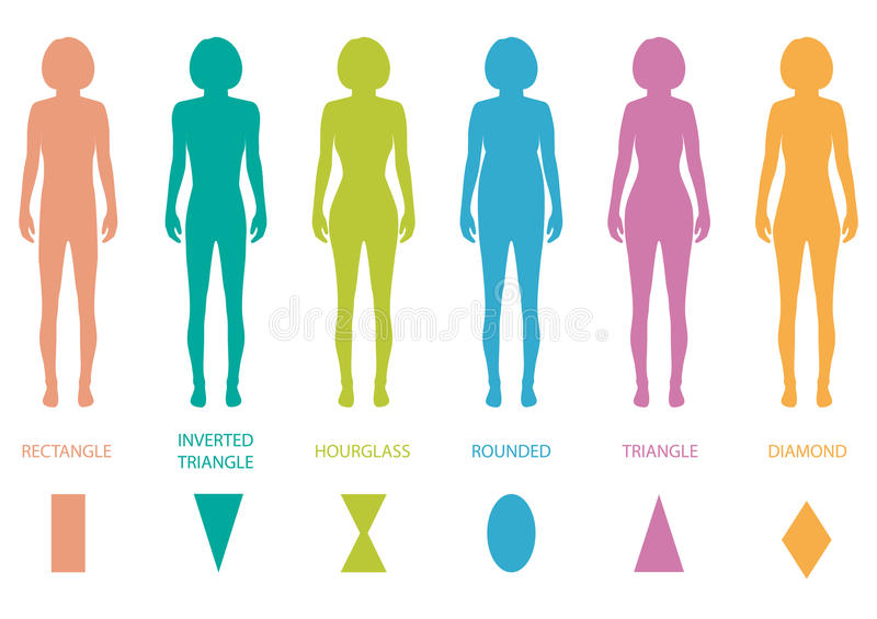 Female body types. Anatomy,woman front figure shape, vector silhouette stock illustration