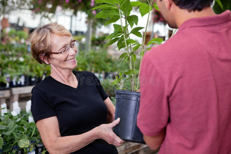 Female buying potted plant. Man handing over potted plant to female customer royalty free stock photography