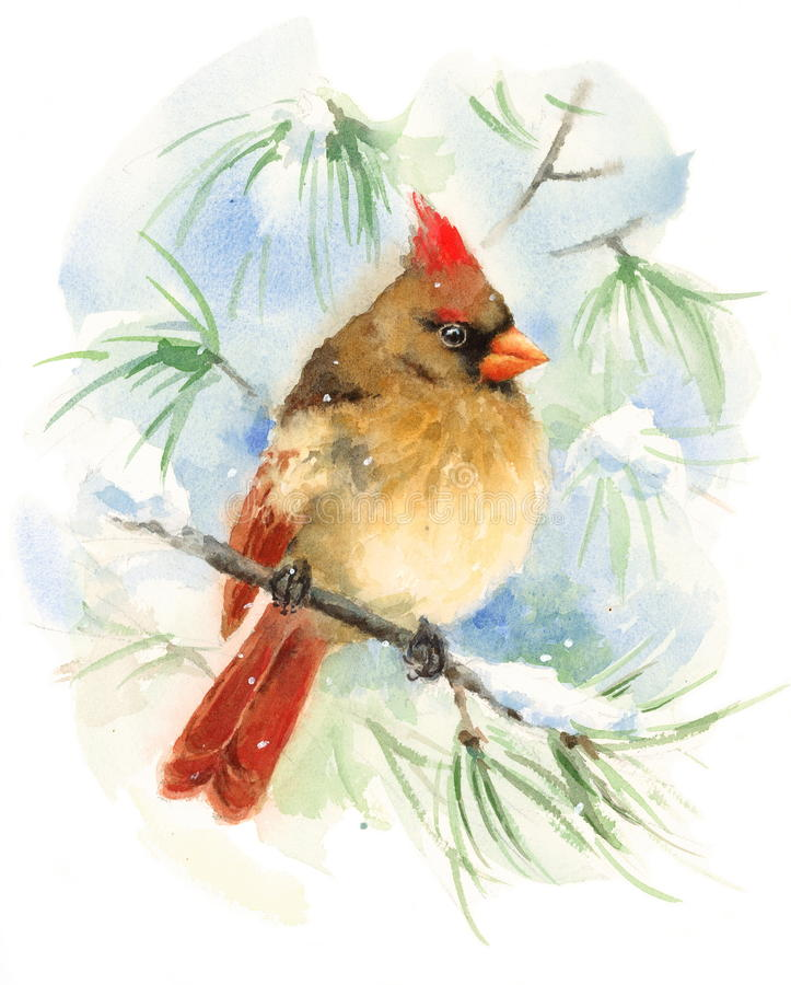 Female Cardinal Bird Watercolor Winter Illustration Hand Painted stock illustration