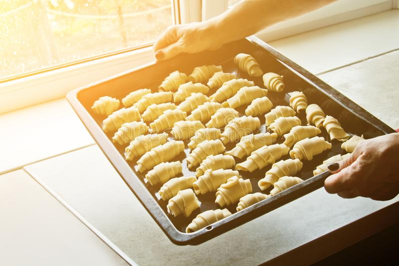 Female cooks hands are holding a tray full of uncooked dough rolls. cooking baking, cooking. baking preparation stage. raw dough stock photography