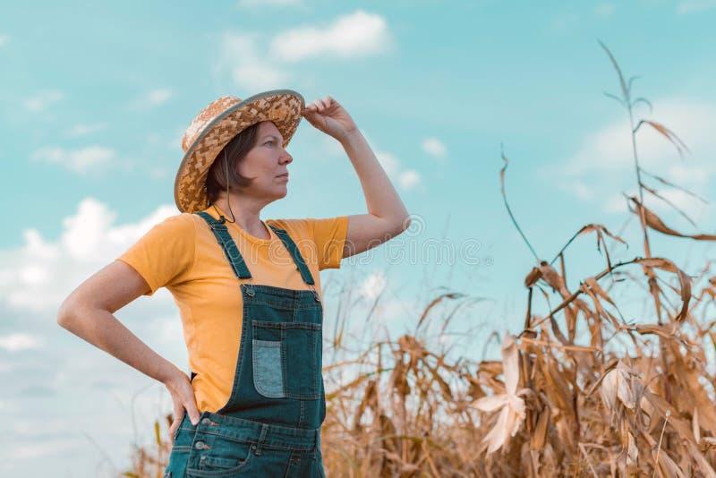 Female corn farmer looking over cornfield stock photo