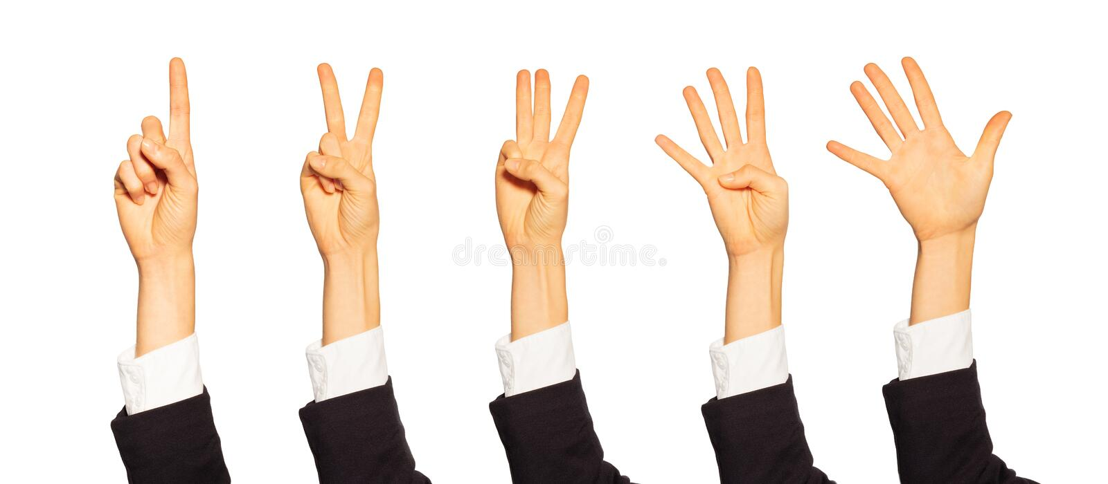 Female counting hands with number gestures on white royalty free stock photography