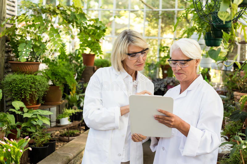 Female coworkers looking in clipboard at greenhouse royalty free stock photography