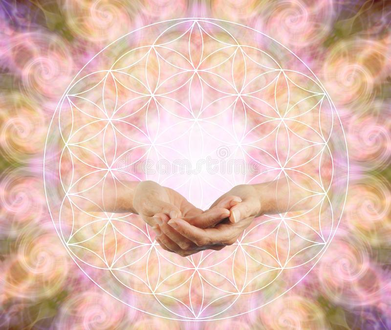 Offering the Flower of Life Blessing. Female cupped hands emerging from a flower of life symbol against a symmetrical repeated circle vortex pattern stock photos