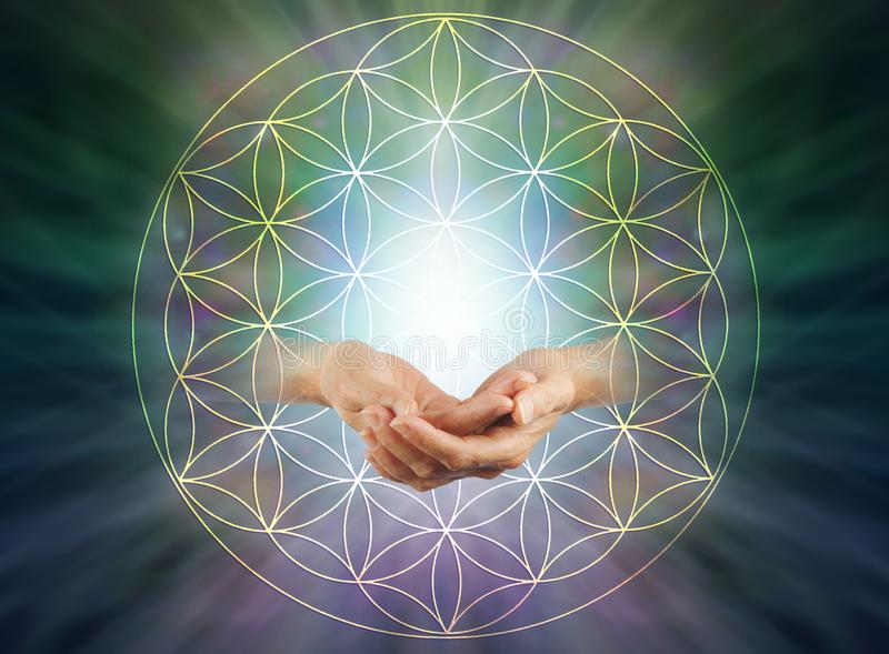 The Flower of Life Blessing. Female cupped hands with energy orb inside   flower of life symbol pattern against a light to dark radiating  background with copy stock image