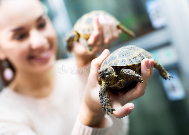 Female customer watching two small tortoises royalty free stock image