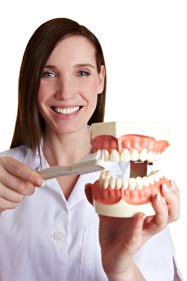 Female dentist brushing teeth royalty free stock photo