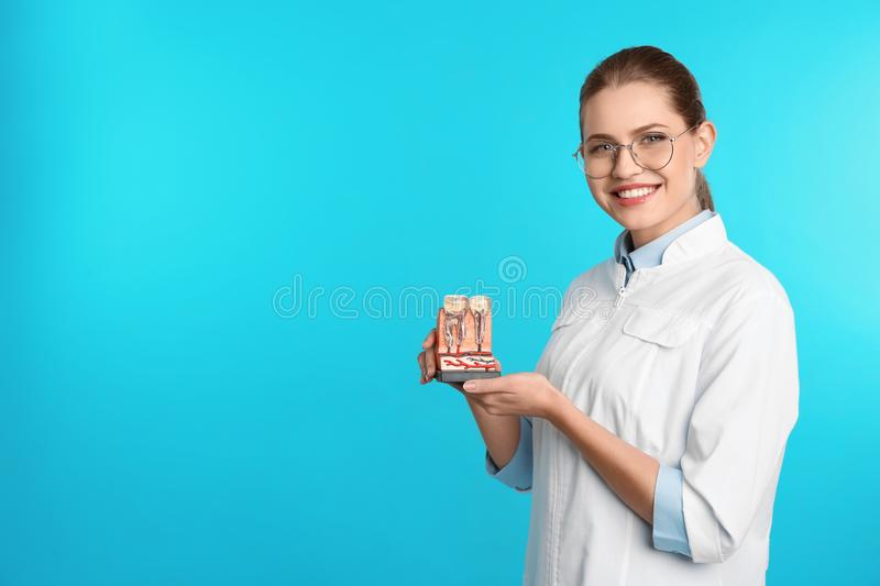 Female dentist holding teeth model on color background. Space for text stock photography