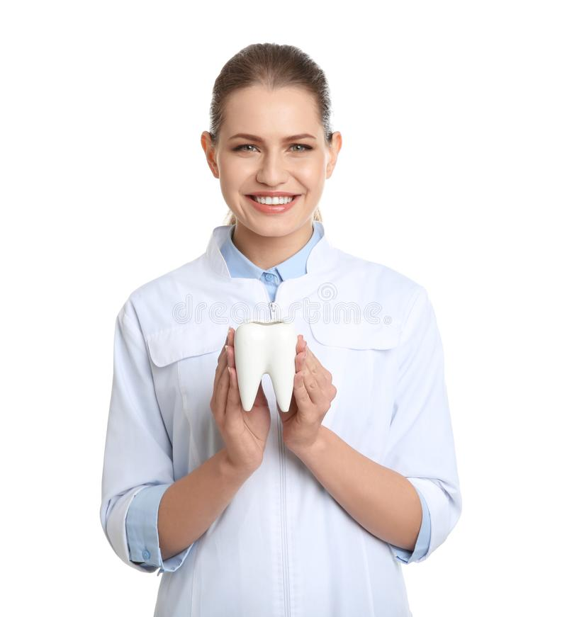 Female dentist holding tooth model on white royalty free stock photography