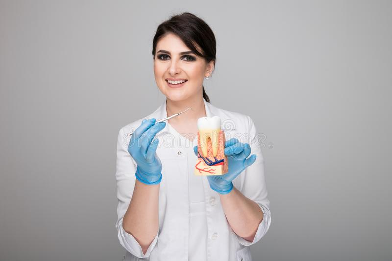 Female dentist with tooth model and dental staff. Female dentist with tooth model and dental staff royalty free stock image