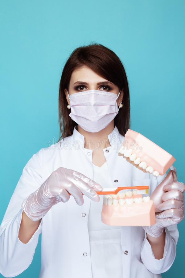 Female dentist in the white mask with jaw isolated in the blue studio. stock images