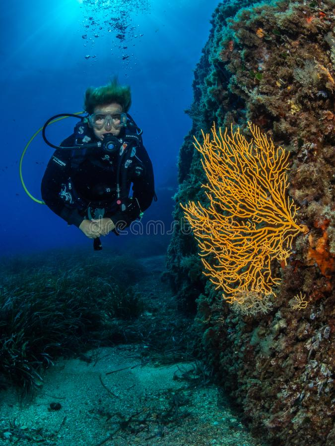 Female diver and Yellow gorgonian, Formiche Reef. Female diver posed next to Yellow gorgonian, Eunicella cavolini, colonies growing on the walls at Formiche Reef stock photography