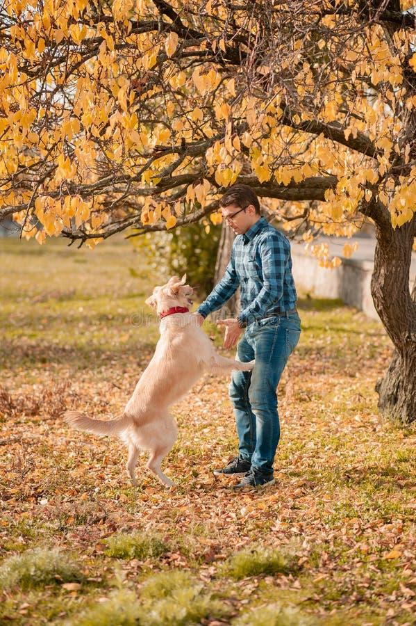 Female with dog golden retriever having fun on autumn vacation royalty free stock photos