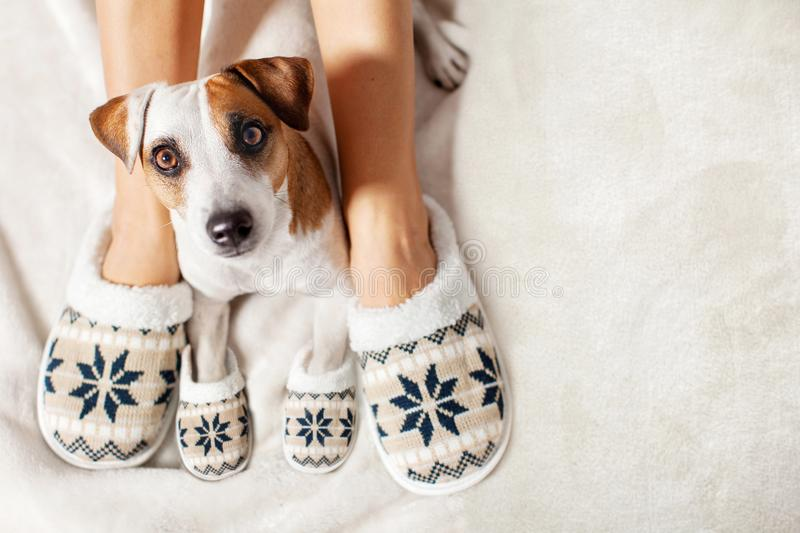 Female and dog in slippers royalty free stock photo