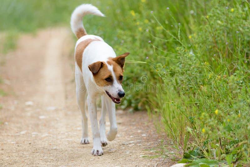 Female dog walking along trail royalty free stock images