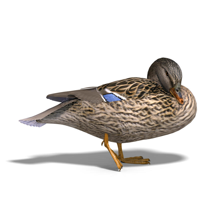 Female duck mallard. 3D rendering with clipping path and shadow over white royalty free illustration
