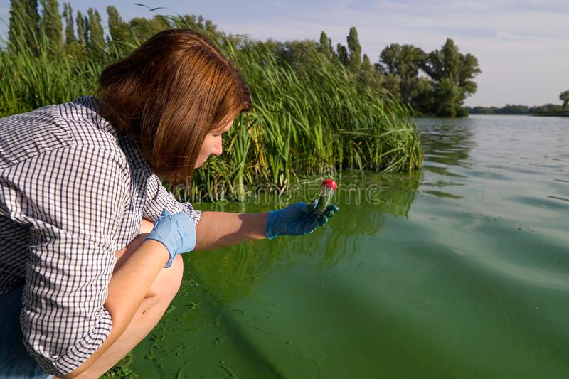 Female ecologist takes samples of river water infected with green algae in tube. Side view of female ecologist takes samples of river water infected with green stock image